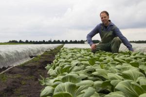 Fred Willemssen, pak-choi grower