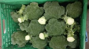Broccoli in Ifco