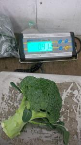 Broccoli op weegschaal