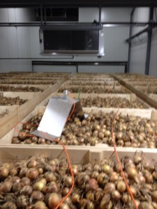 New storage facility for onions at NZ27