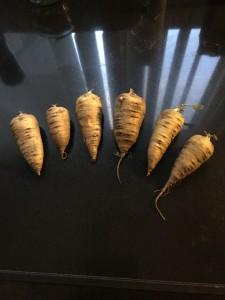 Rooted chervil (knolkervel)